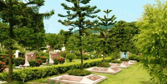 一种新型树葬